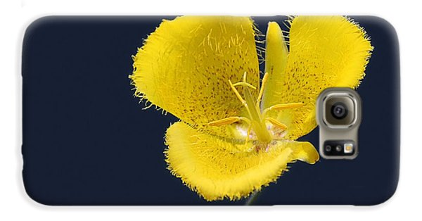 Yellow Star Tulip - Calochortus Monophyllus Galaxy S6 Case by Christine Till