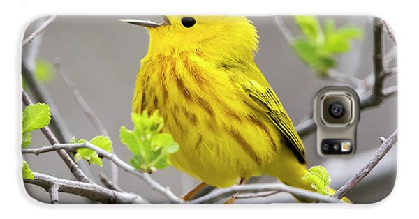 Yellow Warbler  Galaxy S6 Case