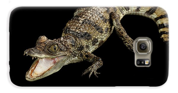 Young Cayman Crocodile, Reptile With Opened Mouth And Waved Tail Isolated On Black Background In Top Galaxy S6 Case by Sergey Taran