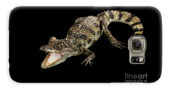 Young Cayman Crocodile, Reptile With Opened Mouth And Waved Tail Isolated On Black Background In Top Galaxy S6 Case
