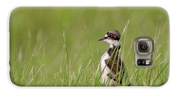 Killdeer Galaxy S6 Case - Young Killdeer In Grass by Mark Duffy