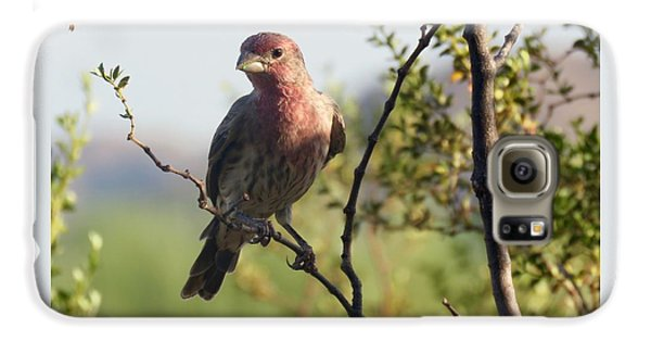 Young Male House Finch Galaxy S6 Case