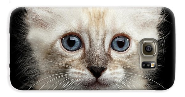 Cat Galaxy S6 Case - Mekong Bobtail Kitty With Blue Eyes On Isolated Black Background by Sergey Taran