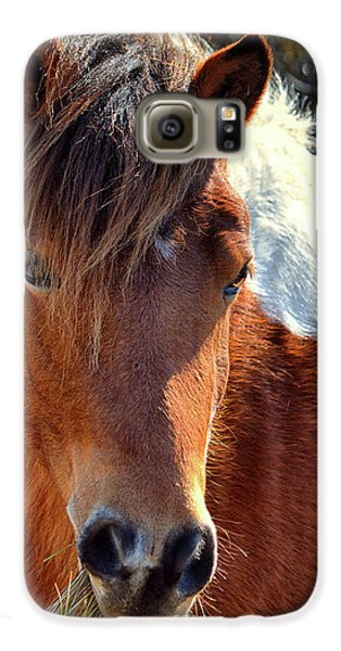 Galaxy S6 Case featuring the photograph Assateague Pinto Mare Ms Macky by Bill Swartwout Fine Art Photography