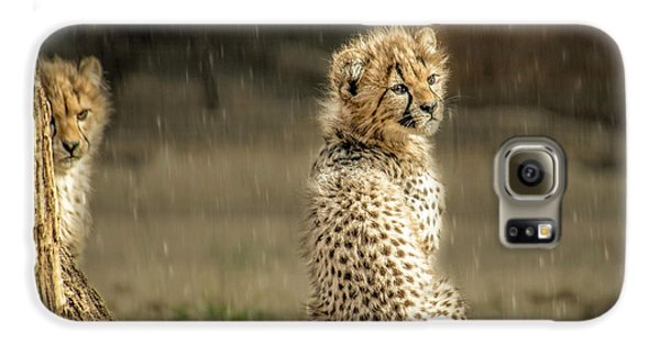 Cheetah Cubs And Rain 0168 Galaxy S6 Case