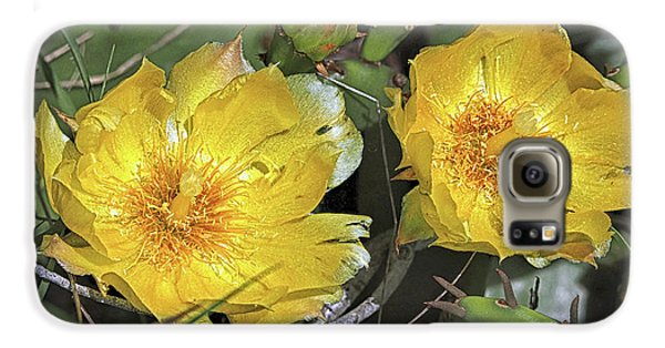 Galaxy S6 Case featuring the photograph Eastern Prickley Pear Cactus Flower On Assateague Island by Bill Swartwout Fine Art Photography