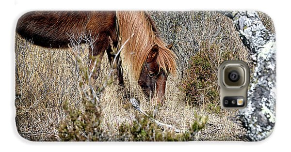 Galaxy S6 Case featuring the photograph Lunchtime For Assateague's Gokey Go Go Bones by Bill Swartwout Fine Art Photography
