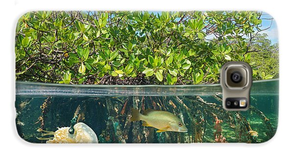 Mangrove Galaxy S6 Case - Mangrove Above And Below Water Surface by Damsea