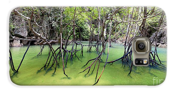 Mangrove Galaxy S6 Case - Mangrove Forest by Banana Republic Images