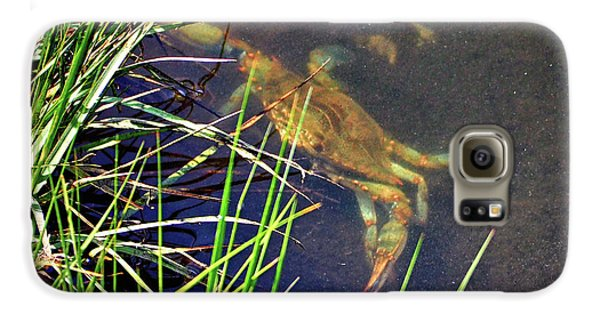 Galaxy S6 Case featuring the photograph Maryland Blue Crab Lurking In An Assateague Marsh by Bill Swartwout Fine Art Photography