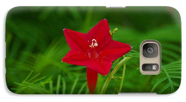 Galaxy Case featuring the photograph  Cypressvine Morning Glory by Blair Wainman
