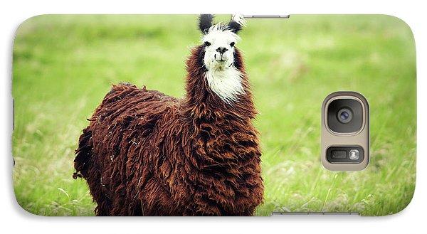 Llama Galaxy S7 Case - An Alpaca Vicugna Pacos Poses by Todd Korol
