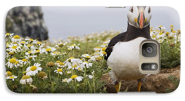 Atlantic Puffin In Breeding Plumage Galaxy S7 Case