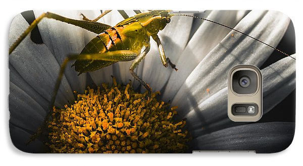 Australian Grasshopper On Flowers. Spring Concept Galaxy S7 Case by Jorgo Photography - Wall Art Gallery