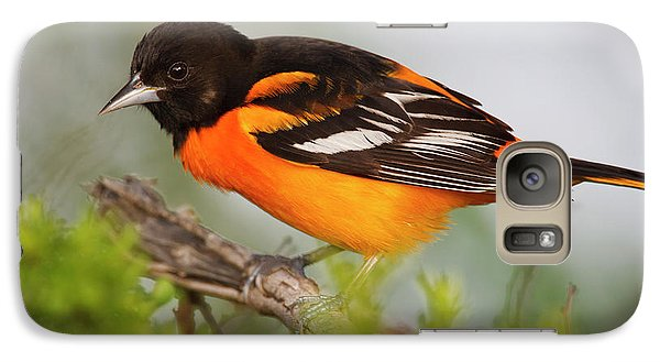 Oriole Galaxy S7 Case - Baltimore Oriole Foraging by Larry Ditto