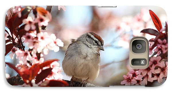 Galaxy Case featuring the photograph Beautiful Sparrow by Trina  Ansel