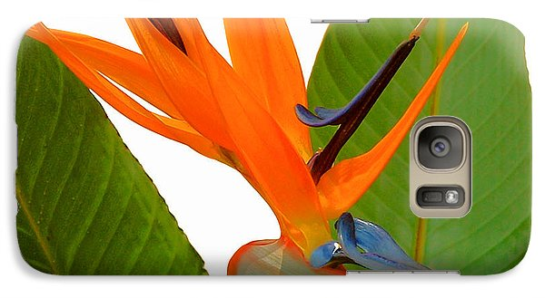 Galaxy Case featuring the photograph Bird Of Paradise by Peg Urban