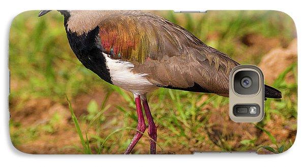 Lapwing Galaxy S7 Case - Brazil A Southern Lapwing (vanellus by Ralph H. Bendjebar