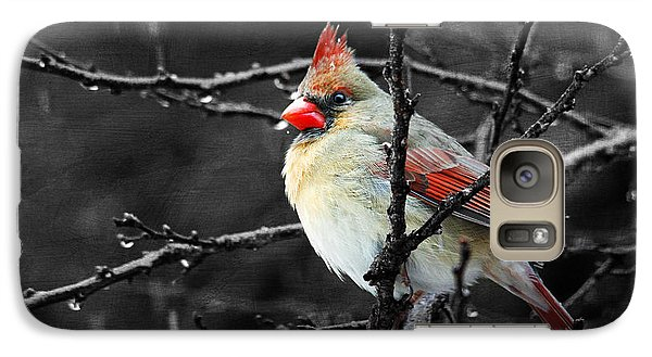 Galaxy Case featuring the photograph Cardinal On A Rainy Day by Trina  Ansel