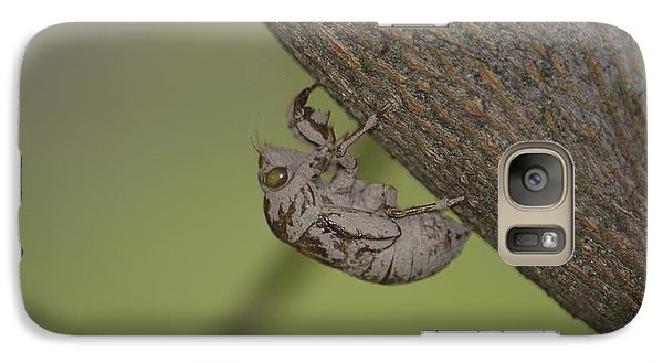 Galaxy Case featuring the photograph Cicada by Randy Bodkins