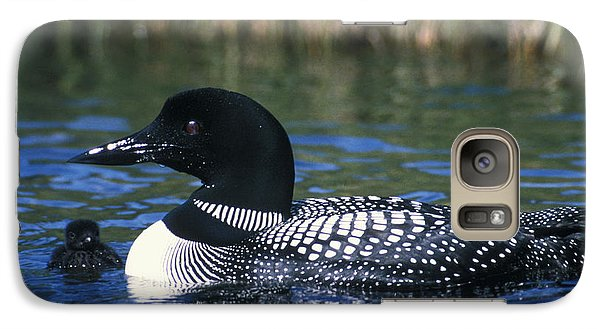 Common Loon Galaxy Case by Mark Newman