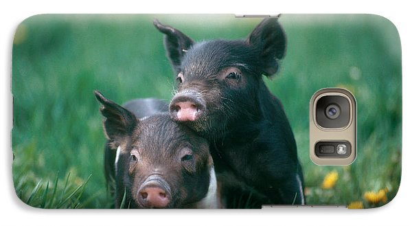 Domestic Piglets Galaxy S7 Case
