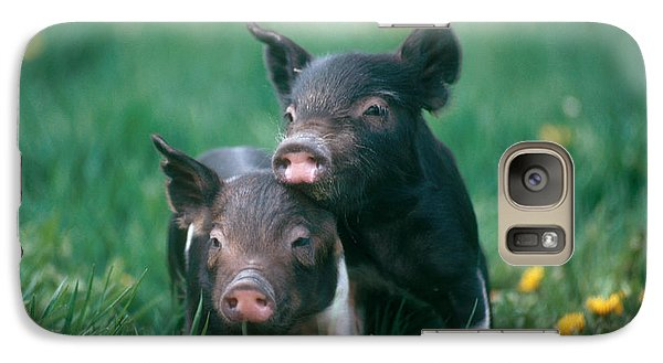 Domestic Piglets Galaxy S7 Case by Alan Carey