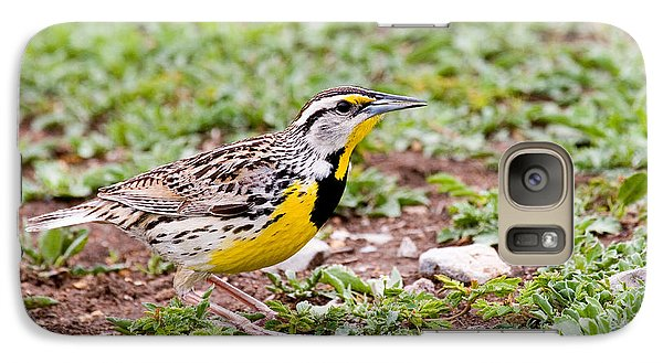 Eastern Meadowlark Sturnella Magna Galaxy Case by Gregory G. Dimijian