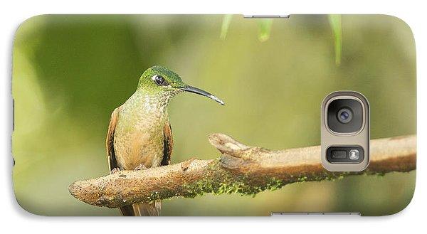Galaxy Case featuring the photograph Fawn-breasted Brilliant Hummingbird by Dan Suzio