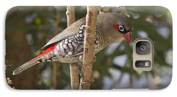 Galaxy Case featuring the photograph Fire Tail Finch by Serene Maisey