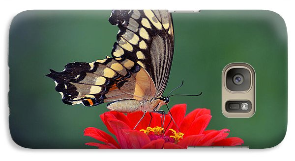 Galaxy Case featuring the photograph Giant Swallowtail by Rodney Campbell