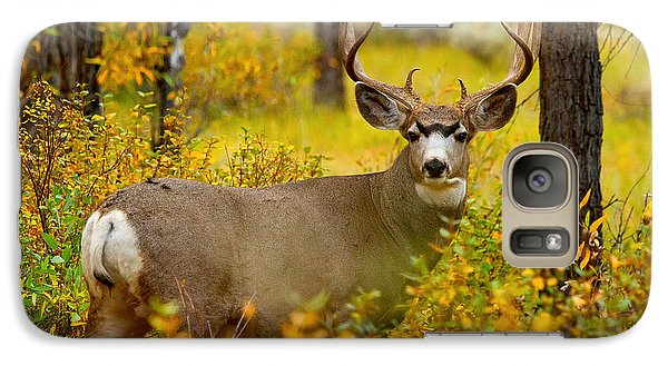 Galaxy Case featuring the photograph Gros Ventre Buck by Aaron Whittemore