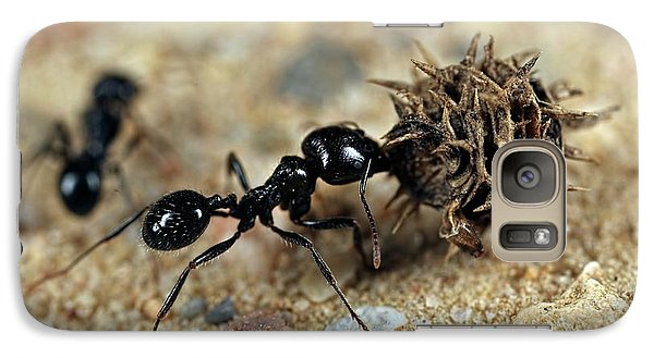 Ant Galaxy S7 Case - Harvester Ant by Frank Fox