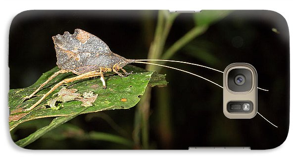 Leaf Mimic Katydid Galaxy Case by Dr Morley Read