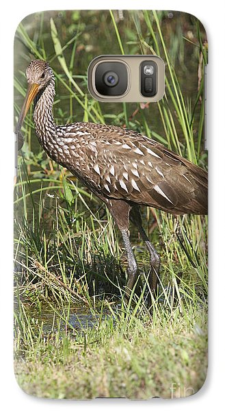 Galaxy Case featuring the photograph Limpkin In The Glades by Christiane Schulze Art And Photography