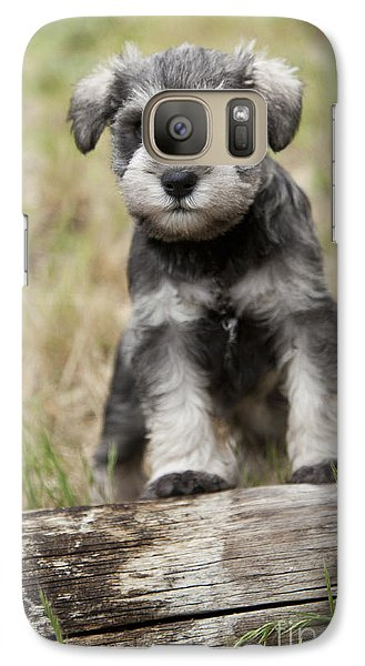 Galaxy Case featuring the photograph Mini Schnauzer Puppy by Serene Maisey
