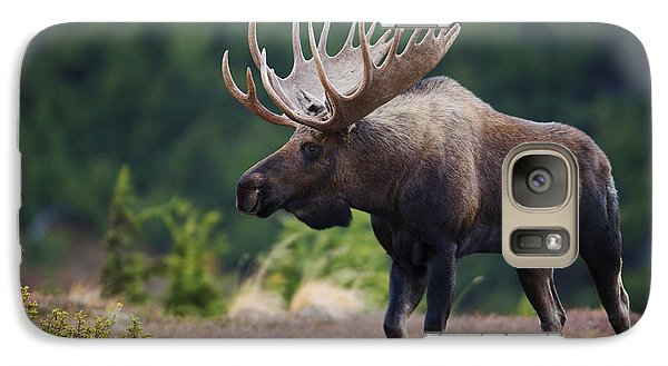 Moose Bull Walking On Autumn Tundra Galaxy Case by Milo Burcham