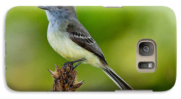 Pale-edged Flycatcher Galaxy S7 Case by Anthony Mercieca