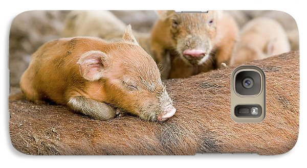 Pigs Reared For Pork On Tuvalu Galaxy S7 Case by Ashley Cooper