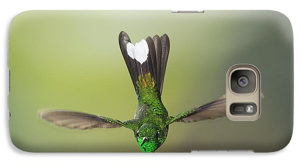 Galaxy Case featuring the photograph Purple-bibbed White-tip Hummingbird by Dan Suzio