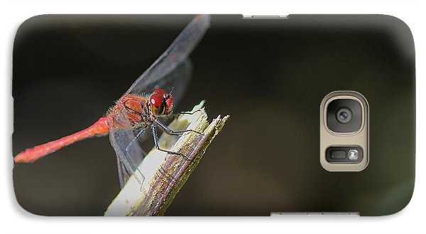 Galaxy Case featuring the photograph Ruddy Darter Dragonfly - Sympetrum Sanguineum by Jivko Nakev