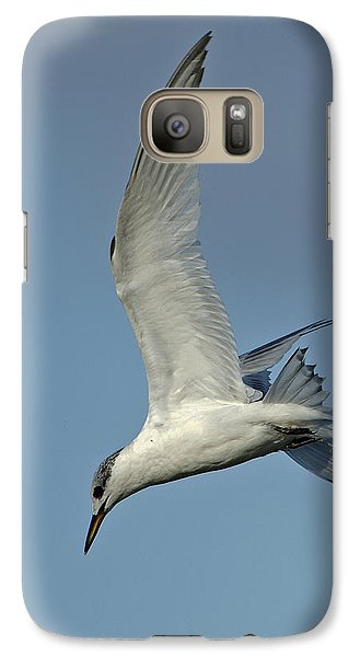Galaxy Case featuring the photograph Sandwich Tern by Paul Scoullar