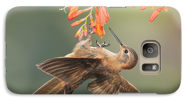 Galaxy Case featuring the photograph Shining Sunbeam Hummingbird by Dan Suzio