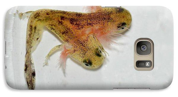 Salamanders Galaxy S7 Case - Two-headed Salamander Tadpole by Photostock-israel
