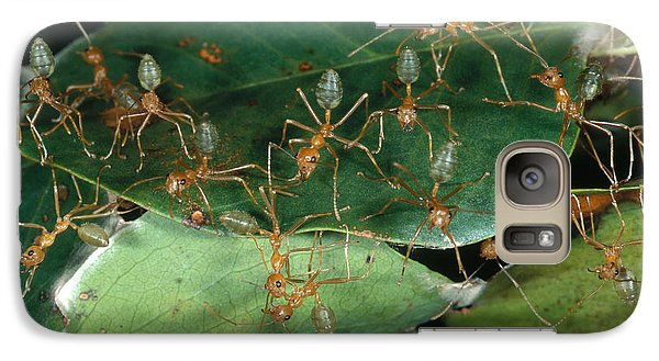 Weaver Ants Galaxy S7 Case