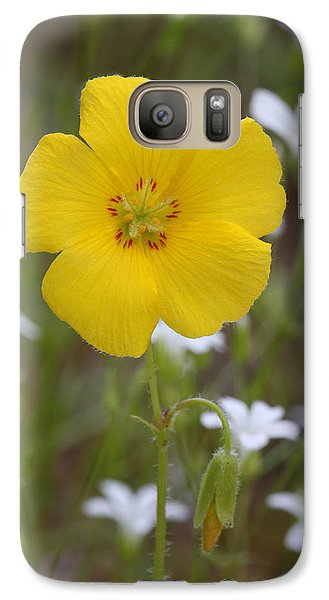 Galaxy Case featuring the photograph Wood Sorrel And Sandwort by Daniel Reed