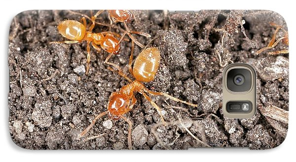 Yellow Meadow Ants Galaxy S7 Case by Bob Gibbons