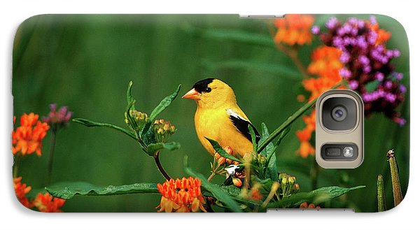 Finch Galaxy S7 Case - American Goldfinch (carduelis Tristis by Richard and Susan Day