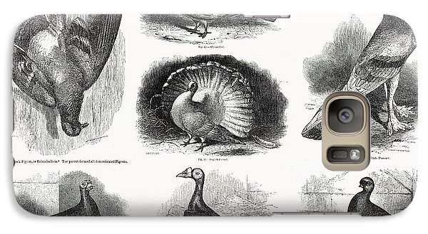 1868 Darwin Pigeon Breeds Illustration Galaxy S7 Case by Paul D Stewart