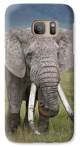African Elephant Loxodonta Africana Galaxy S7 Case by Panoramic Images
